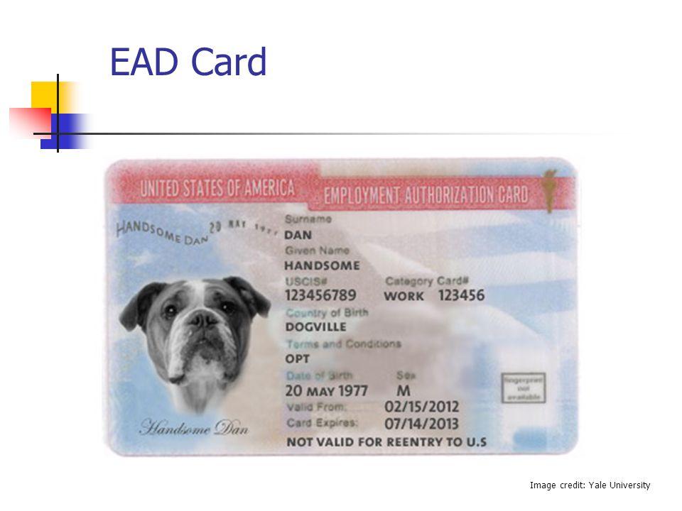EAD Card Image credit: Yale University