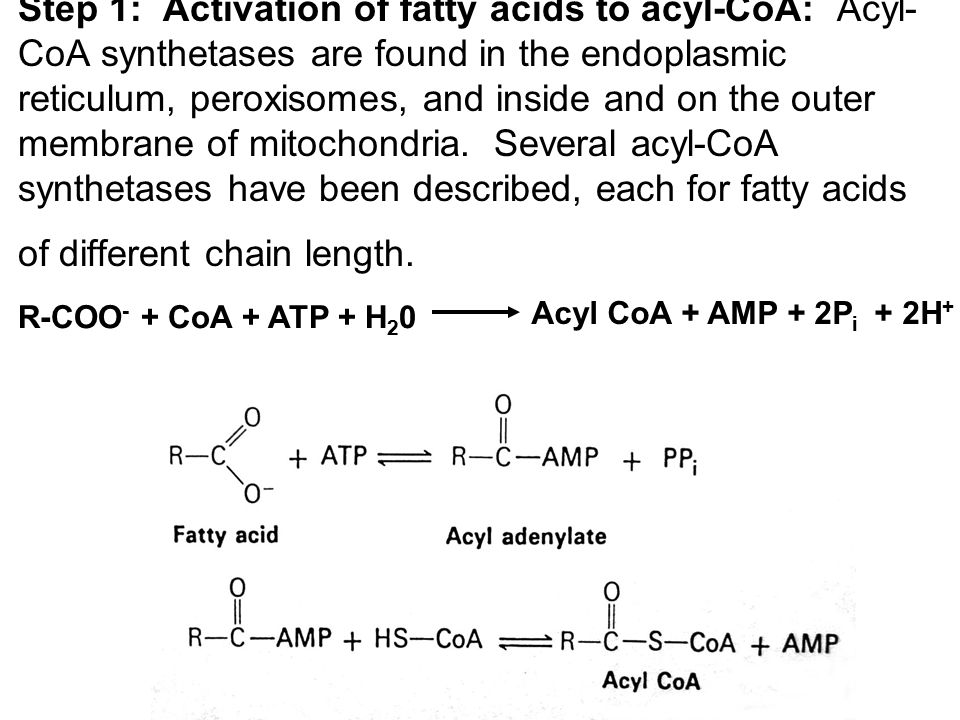 Step 2: Long-chain fatty acids penetrate inner mitochondrial membrane as carnitine derivatives.