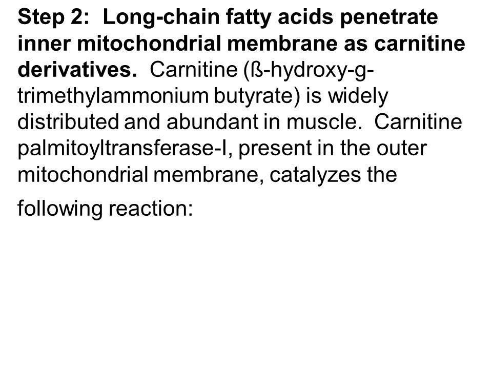 Step 2: Long-chain fatty acids penetrate inner mitochondrial membrane as carnitine derivatives. Carnitine (ß-hydroxy-g- trimethylammonium butyrate) is