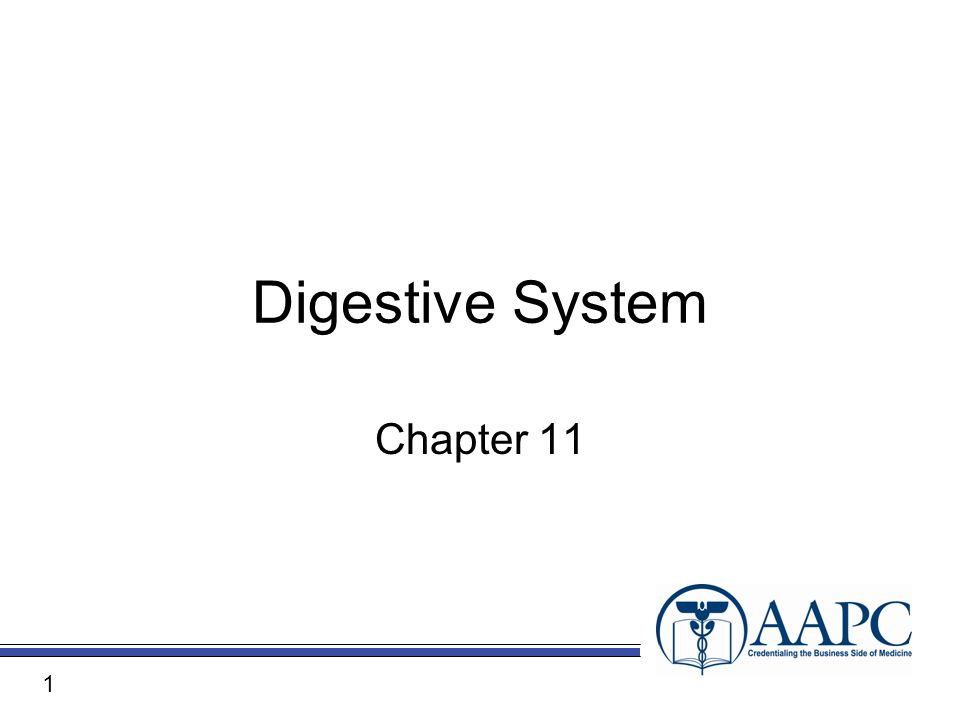 Digestive System Chapter 11 1