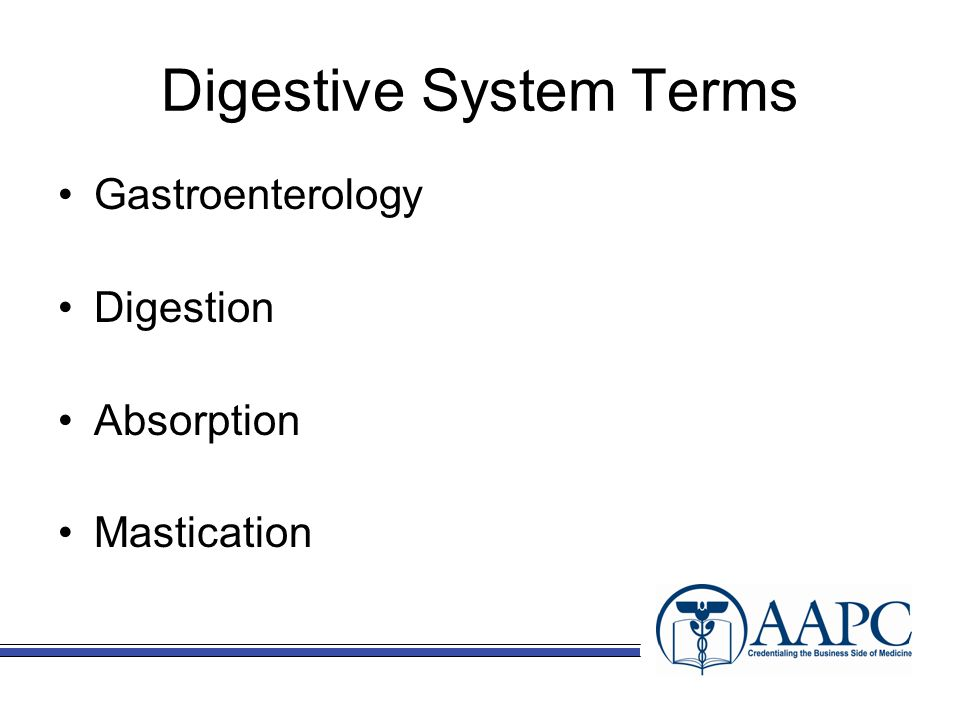 Digestive System Terms Gastroenterology Digestion Absorption Mastication