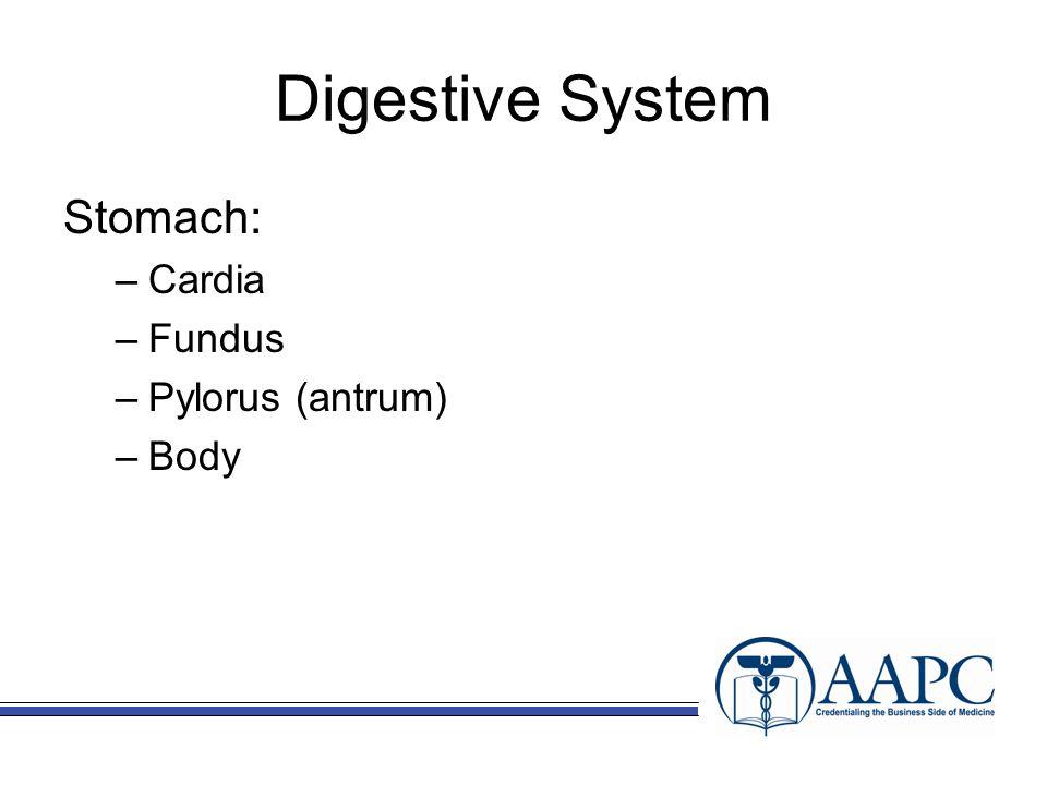 Digestive System Small Intestine (small bowel) –Duodenum –Jejunum –Ileum Large Intestine (large bowel) –Cecum (appendix attached) –Colon Ascending colon Transverse colon Descending colon Sigmoid colon Rectum Anus
