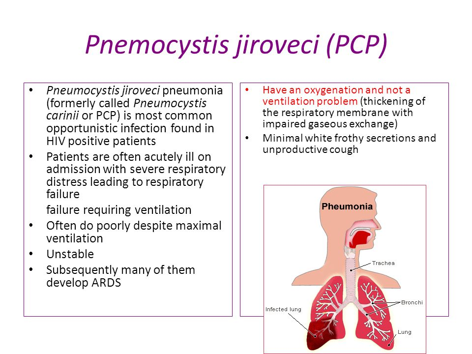 Pnemocystis jiroveci (PCP) Pneumocystis jiroveci pneumonia (formerly called Pneumocystis carinii or PCP) is most common opportunistic infection found in HIV positive patients Patients are often acutely ill on admission with severe respiratory distress leading to respiratory failure failure requiring ventilation Often do poorly despite maximal ventilation Unstable Subsequently many of them develop ARDS Have an oxygenation and not a ventilation problem (thickening of the respiratory membrane with impaired gaseous exchange) Minimal white frothy secretions and unproductive cough