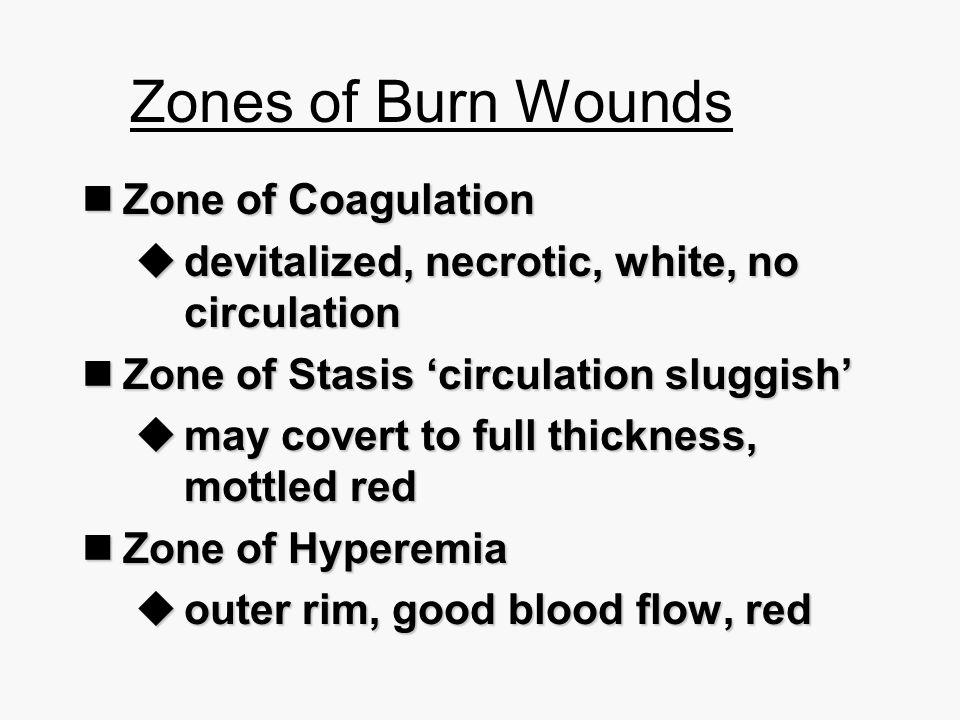 Zones of Burn Wounds Zone of Coagulation Zone of Coagulation  devitalized, necrotic, white, no circulation Zone of Stasis 'circulation sluggish' Zone