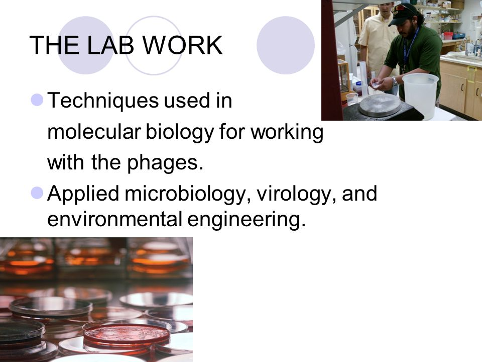 THE LAB WORK Techniques used in molecular biology for working with the phages.