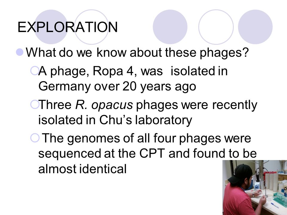 EXPLORATION What do we know about these phages.