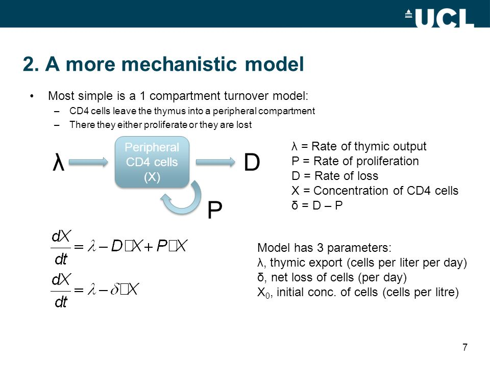 2. A more mechanistic model Most simple is a 1 compartment turnover model: –CD4 cells leave the thymus into a peripheral compartment –There they eithe