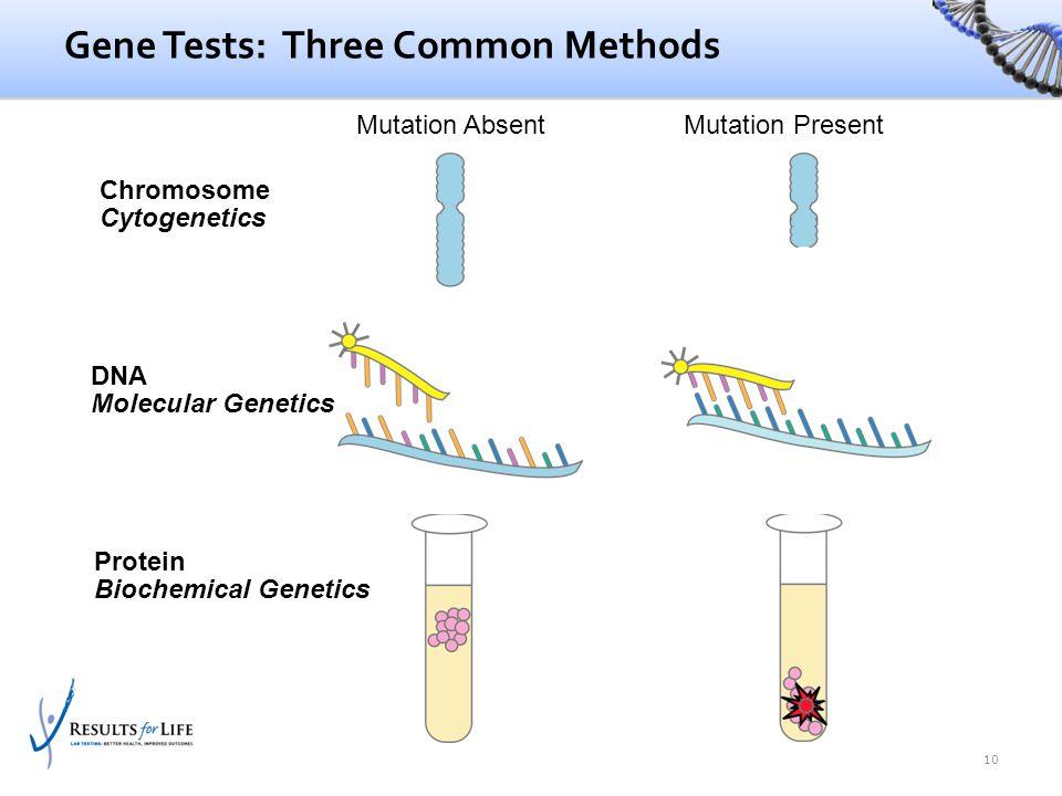 Chromosome Cytogenetics Protein Biochemical Genetics DNA Molecular Genetics Gene Tests: Three Common Methods 10 Mutation AbsentMutation Present