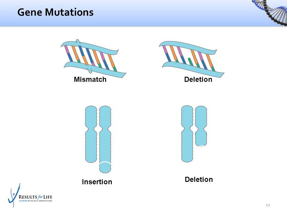 Mismatch Insertion Deletion Gene Mutations 14