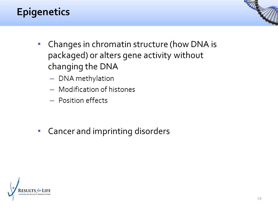 Epigenetics Changes in chromatin structure (how DNA is packaged) or alters gene activity without changing the DNA – DNA methylation – Modification of