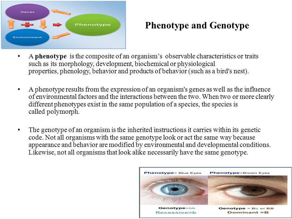Phenotype and Genotype A phenotype is the composite of an organism's observable characteristics or traits such as its morphology, development, biochem