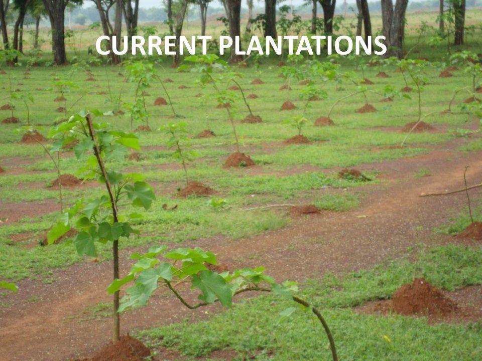 CURRENT PLANTATIONS