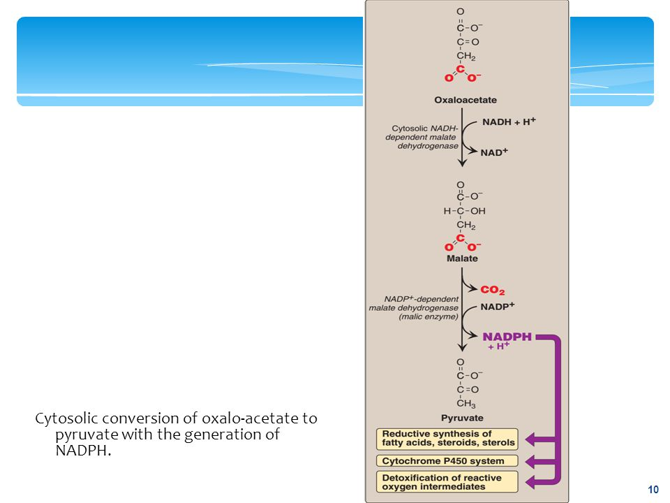 Cytosolic conversion of oxalo-acetate to pyruvate with the generation of NADPH. 10