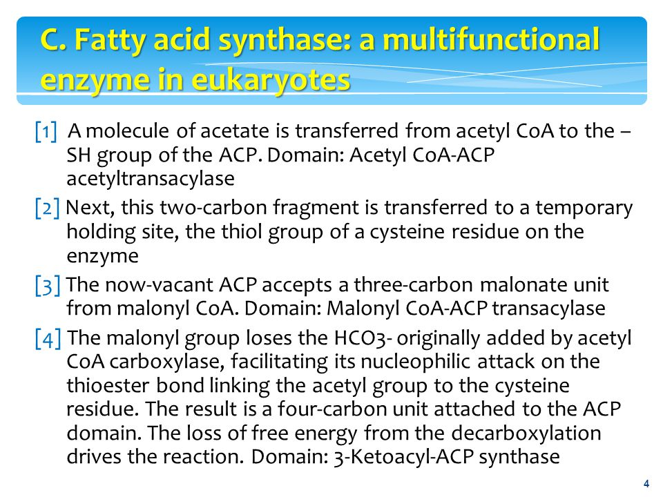  The mobilization of stored fat requires the hydrolytic release of fatty acids and glycerol from their TAG form.