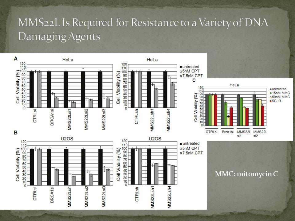 MMC: mitomycin C