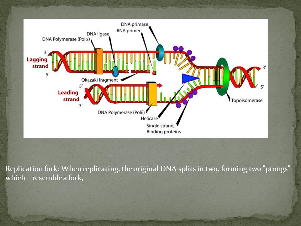 CPT: Camptothecin DNA topoisomerase I inhibitor