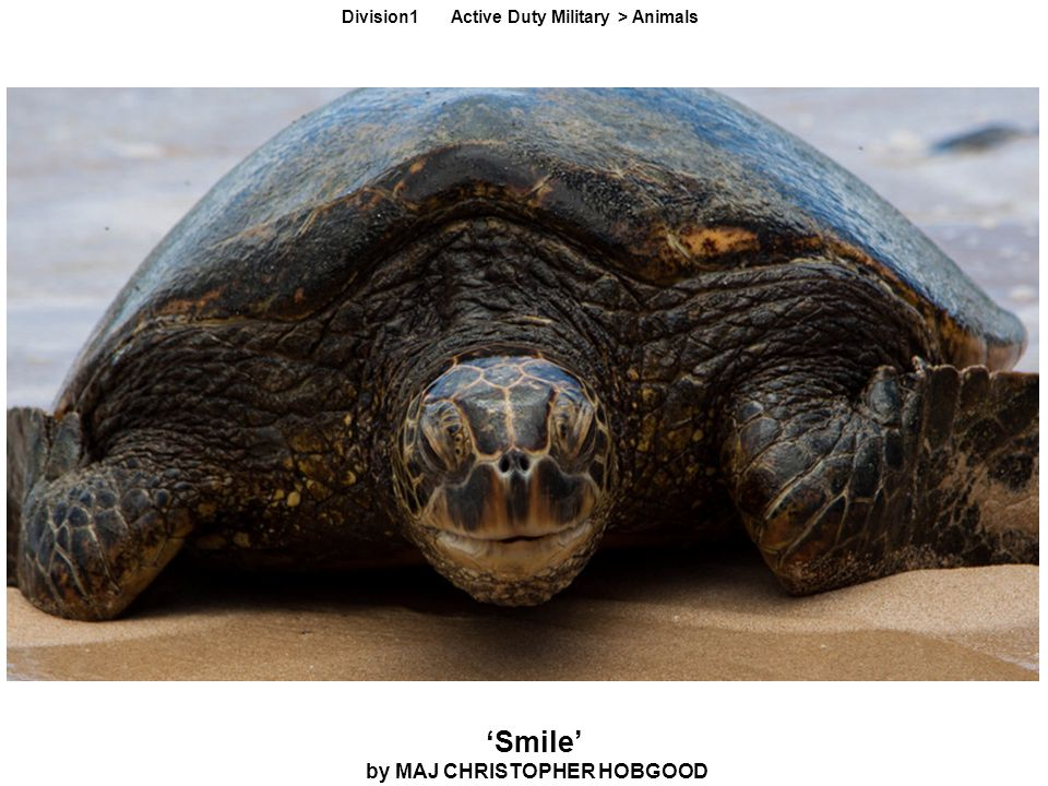 'Smile' by MAJ CHRISTOPHER HOBGOOD Division1 Active Duty Military > Animals