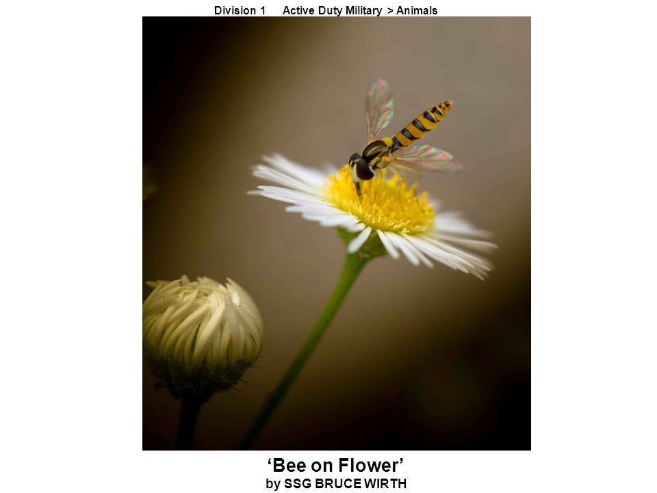 'Bee on Flower' by SSG BRUCE WIRTH