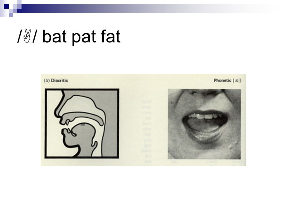 /  / bat pat fat