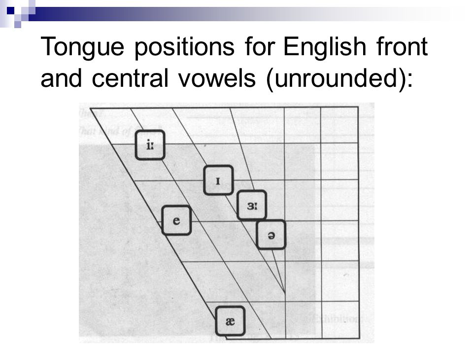 Tongue positions for English front and central vowels (unrounded):