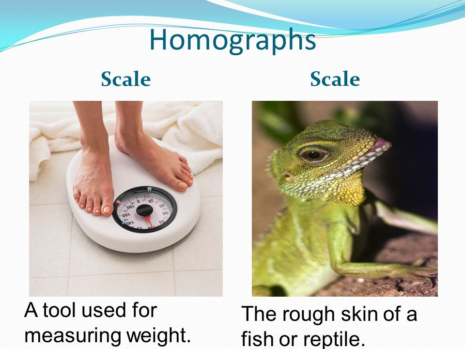 Homographs Scale A tool used for measuring weight. The rough skin of a fish or reptile.