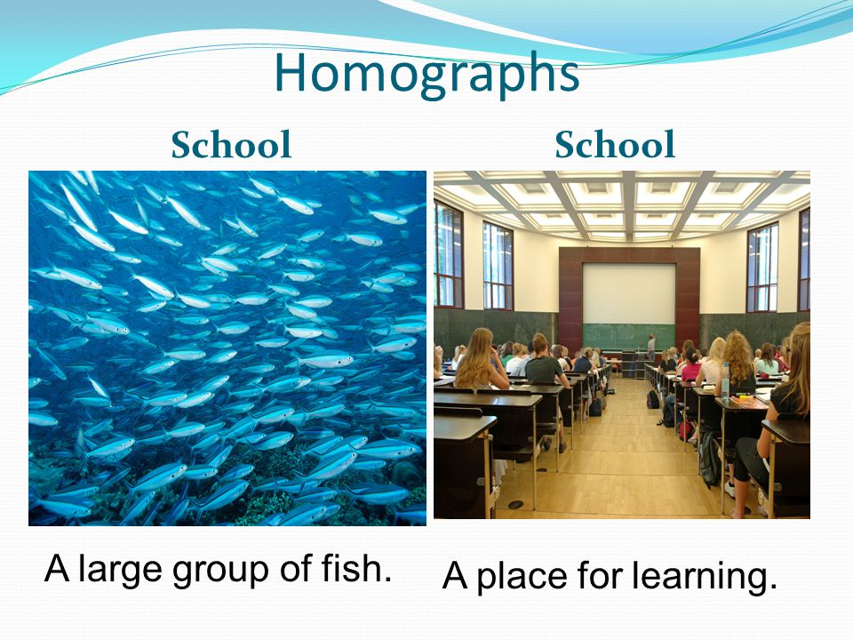 Homographs School A large group of fish. A place for learning.