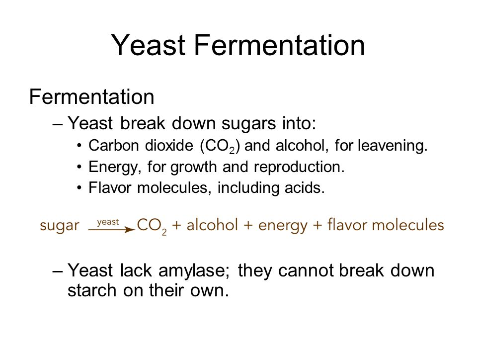 Yeast Fermentation Fermentation –Yeast break down sugars into: Carbon dioxide (CO 2 ) and alcohol, for leavening. Energy, for growth and reproduction.