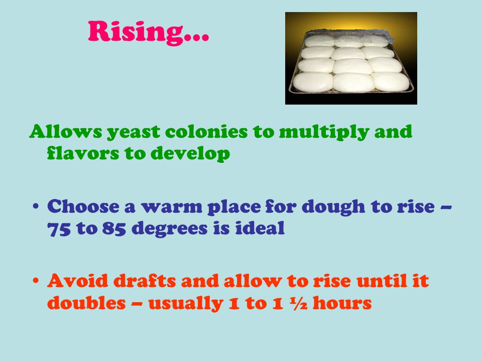Rising… Allows yeast colonies to multiply and flavors to develop Choose a warm place for dough to rise – 75 to 85 degrees is ideal Avoid drafts and al