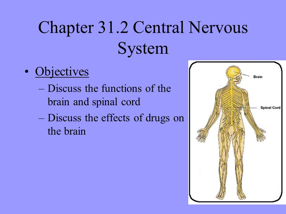 Chapter 31.2 Central Nervous System Objectives –Discuss the functions of the brain and spinal cord –Discuss the effects of drugs on the brain