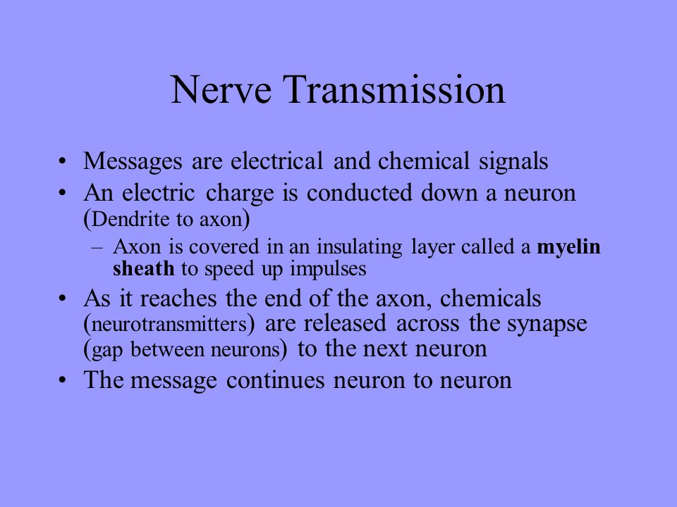 Nerve Transmission Messages are electrical and chemical signals An electric charge is conducted down a neuron ( Dendrite to axon ) –Axon is covered in
