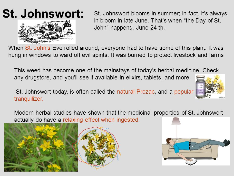 St. Johnswort: St. Johnswort blooms in summer; in fact, it's always in bloom in late June.