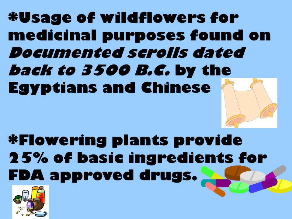 *Usage of wildflowers for medicinal purposes found on Documented scrolls dated back to 3500 B.C.
