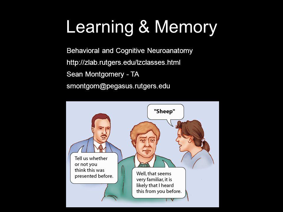 Learning & Memory Sean Montgomery - TA Behavioral and Cognitive Neuroanatomy http://zlab.rutgers.edu/lzclasses.html smontgom@pegasus.rutgers.edu