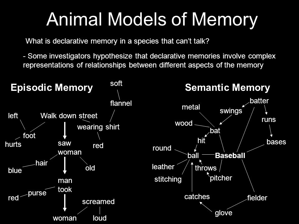 Animal Models of Memory What is declarative memory in a species that can't talk.