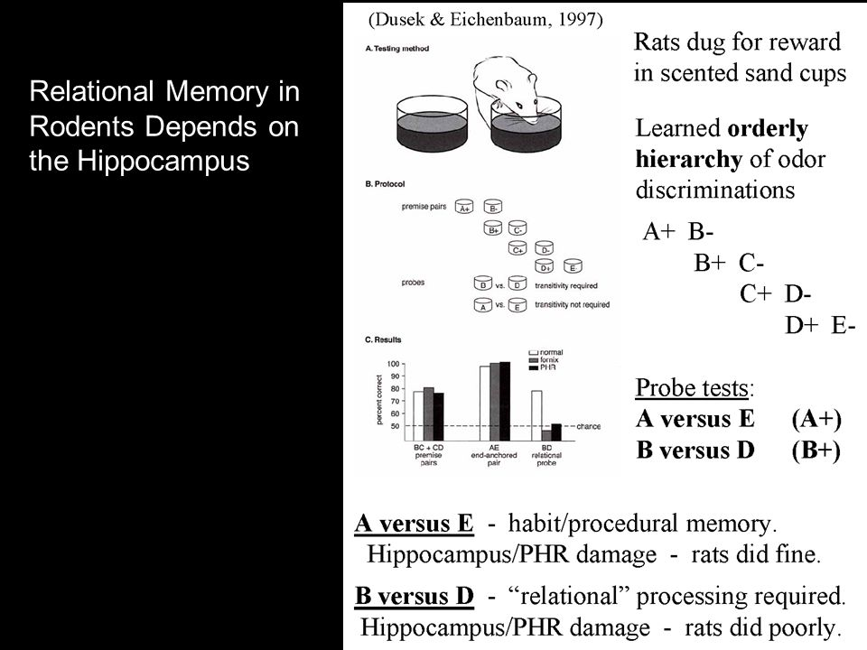 Relational Memory in Rodents Depends on the Hippocampus