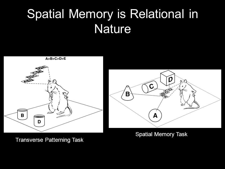 Spatial Memory is Relational in Nature Transverse Patterning Task Spatial Memory Task