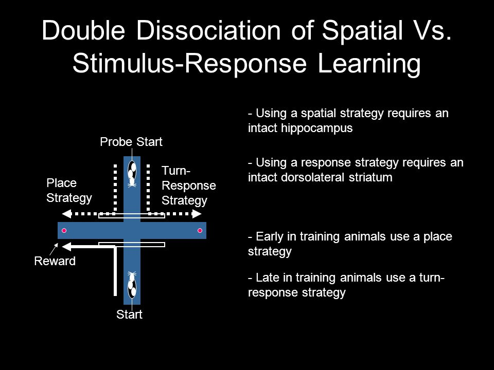 Double Dissociation of Spatial Vs.
