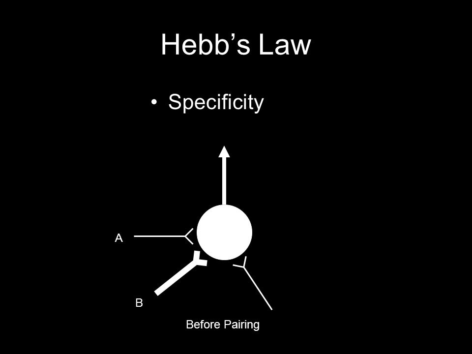 Hebb's Law Specificity Before Pairing A B