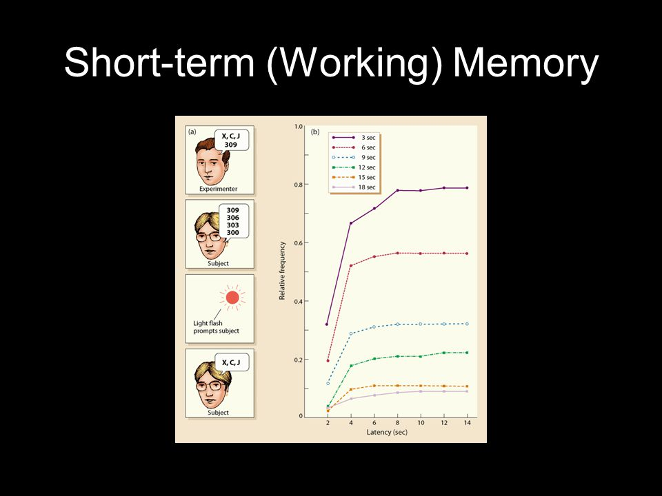 Short-term (Working) Memory
