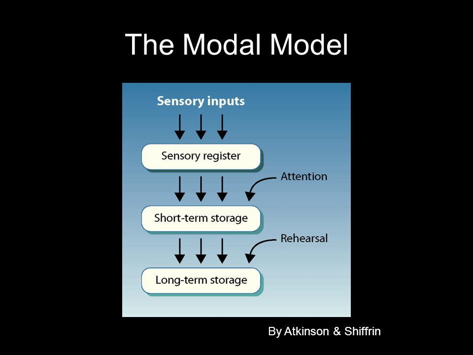 The Modal Model By Atkinson & Shiffrin