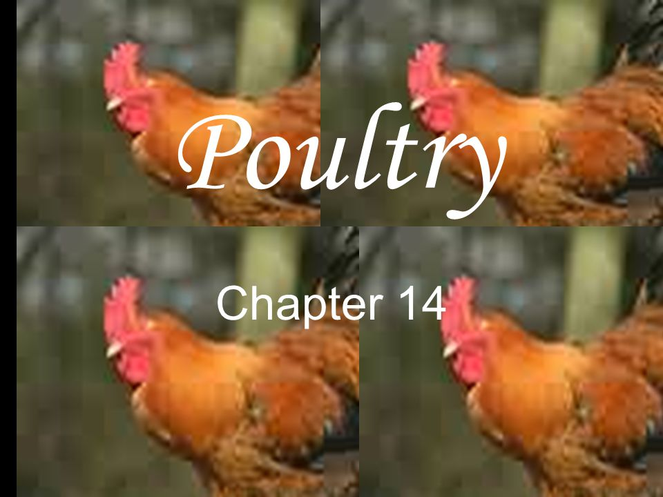Poultry Chapter 14