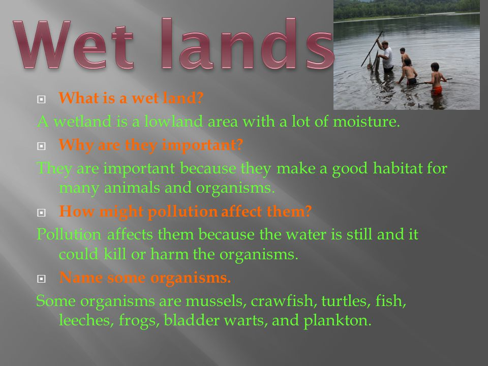  What is a wet land.A wetland is a lowland area with a lot of moisture.