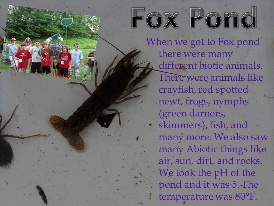 When we got to Fox pond there were many different biotic animals.