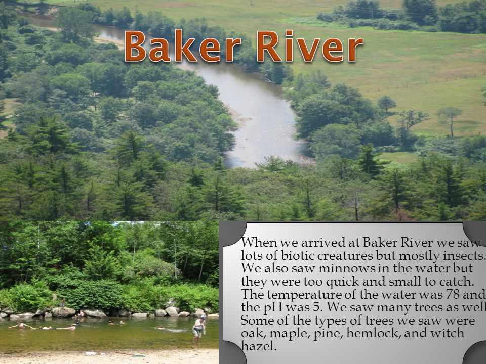 When we arrived at Baker River we saw lots of biotic creatures but mostly insects. We also saw minnows in the water but they were too quick and small