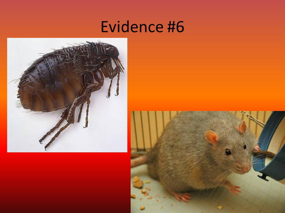 Evidence #6