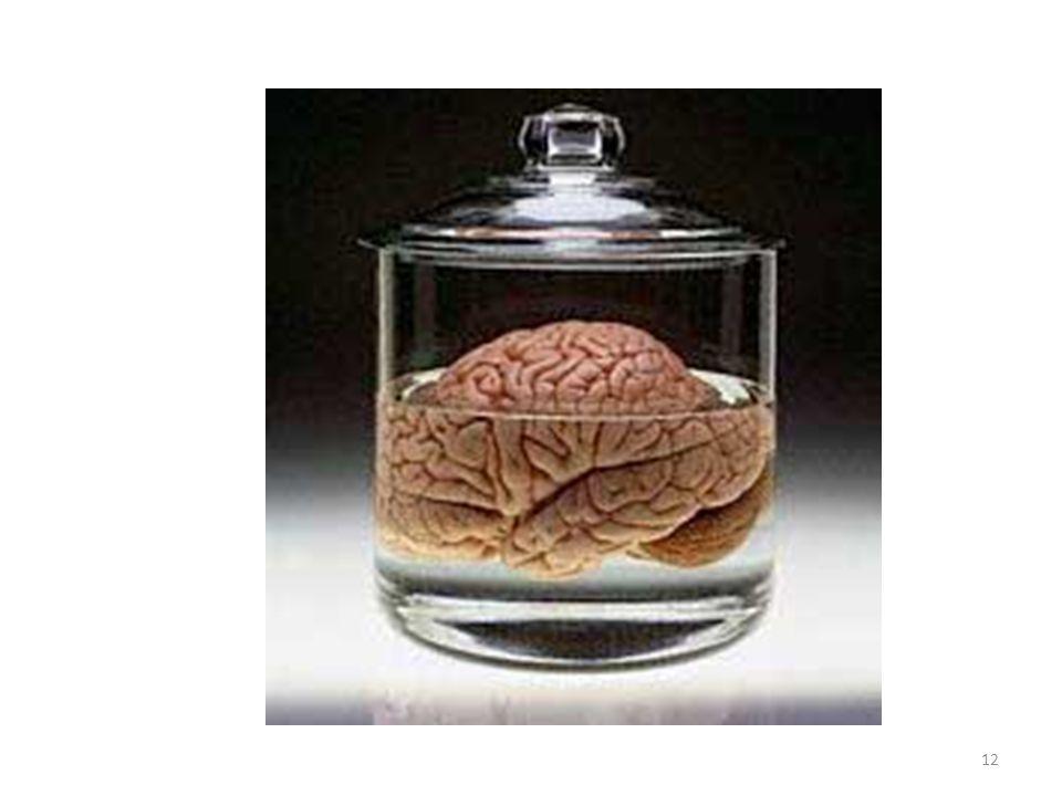 Brain 12