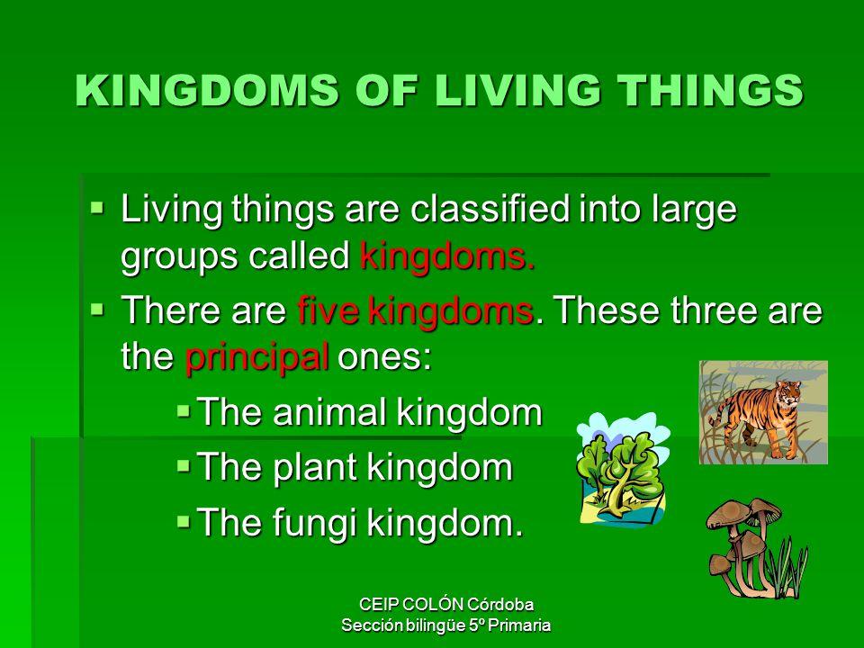 5 Kingdoms CEIP COLÓN Córdoba Sección bilingüe 5º Primaria