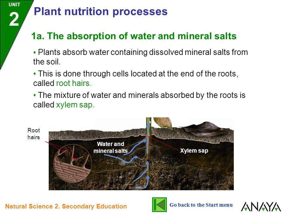 Plants absorb water containing dissolved mineral salts from the soil.