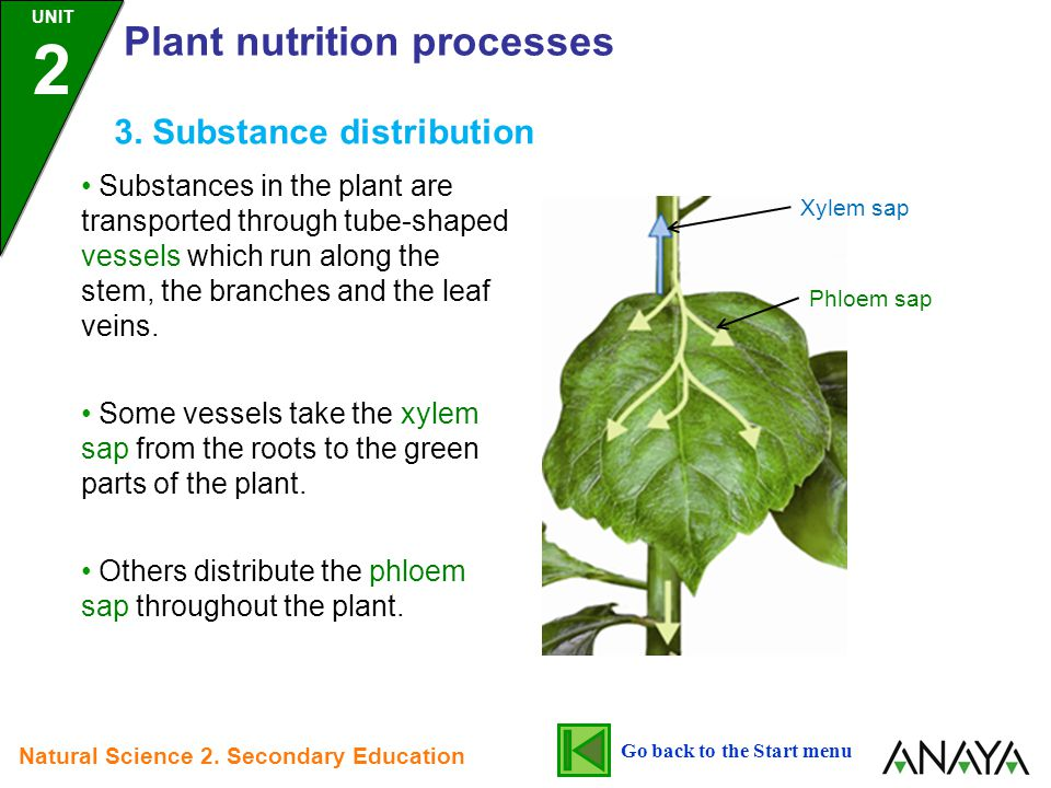 3. Substance distribution Substances in the plant are transported through tube-shaped vessels which run along the stem, the branches and the leaf vein