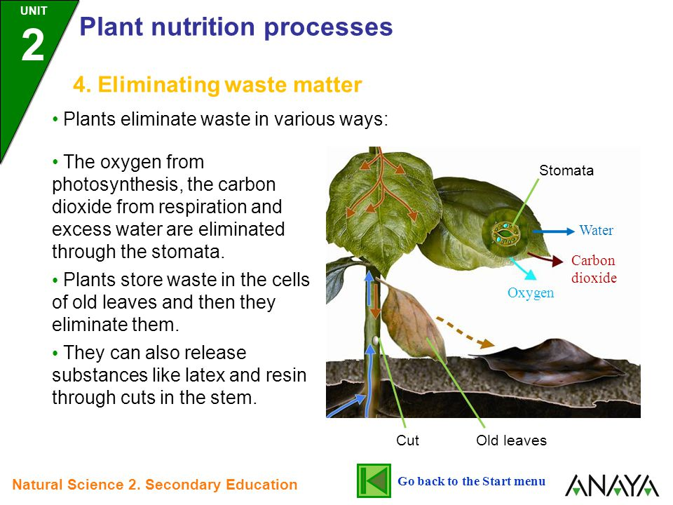 4. Eliminating waste matter Plants eliminate waste in various ways: The oxygen from photosynthesis, the carbon dioxide from respiration and excess wat